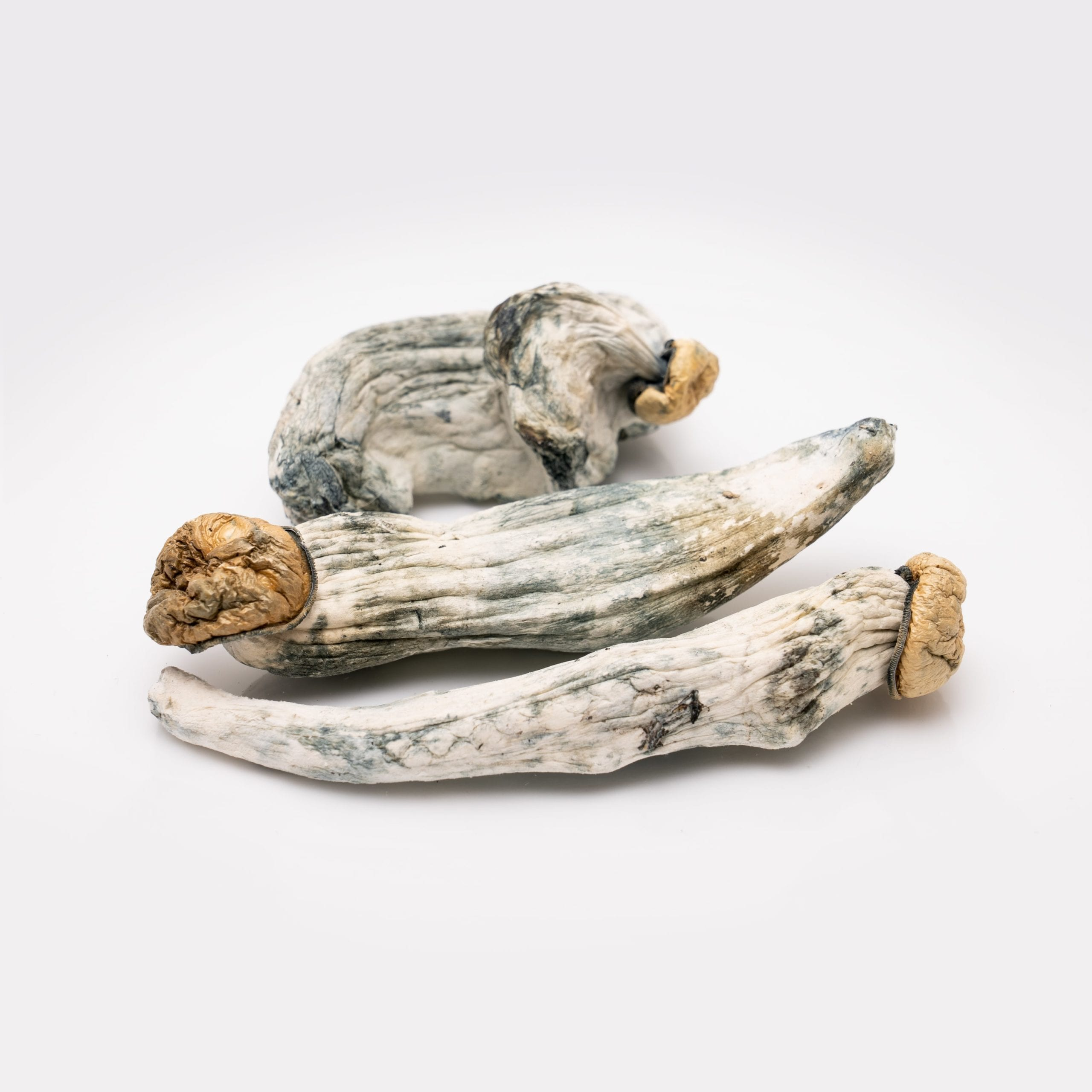 dried penis envy mushrooms