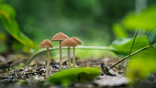 magic mushrooms growing in the woods