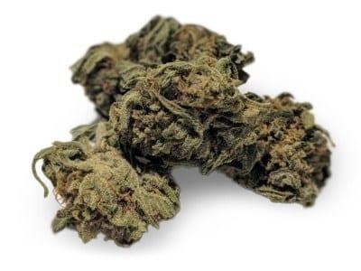 Indica cannabis strain
